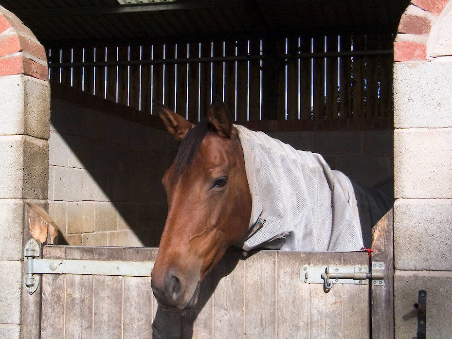 Field Farm Cross Country Livery horse in stables
